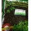 ชาเจียวกู่หลานชนิดใบชาเกรดA 100กรัม(ซื้อ1 แถม1) thumbnail 4