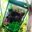 ชาเจียวกู่หลานชนิดใบชาเกรดA 100กรัม(ซื้อ1 แถม1) thumbnail 1