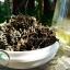 ชาเจียวกู่หลานชนิดใบชาเกรดA 100กรัม(ซื้อ1 แถม1) thumbnail 3