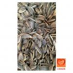 เมล็ดทานตะวันอบแห้ง (Sunflower Seeds)